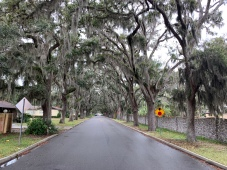 Tree tunnel with Spanish Moss